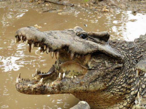 crocodile gad wetlands
