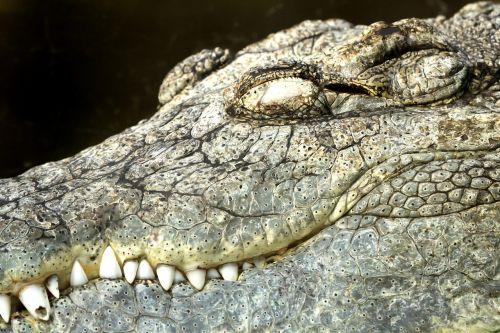 crocodile diergaarde blijdorp zoo