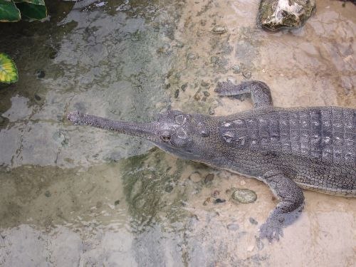 crocodile water thrill
