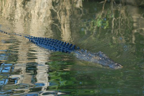 crocodile australia kakadu national park