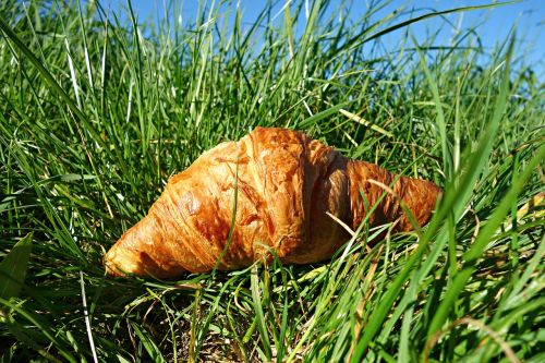 croissant roll bread