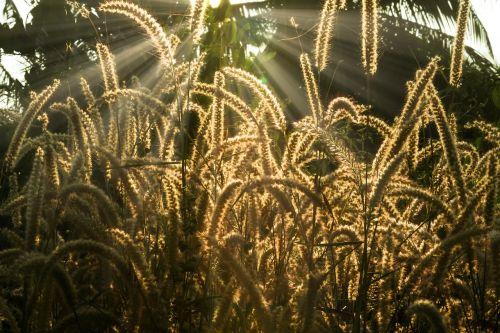 crop food nature