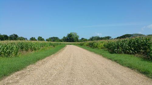 pasėliai,ūkininkavimas,Belizas,kelias,žvyro kelias,atgal kelias,žvyras,kukurūzų laukas,medžiai,dangus