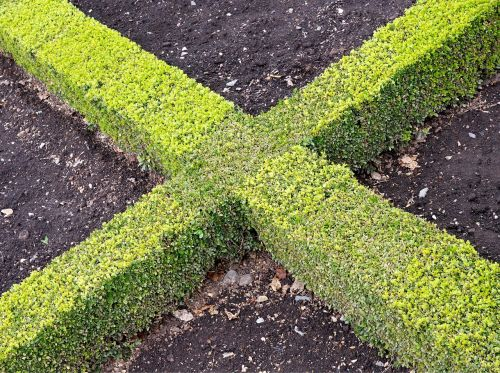 cross x hedge