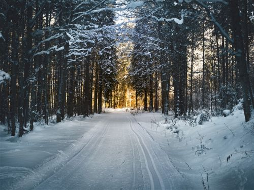 cross country skiing forest snow