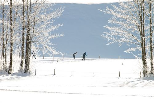 cross country skiing winter trail