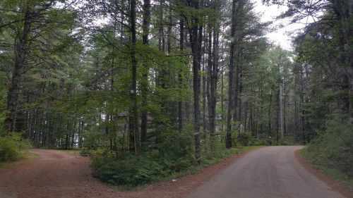 kryžkelės,kelias,pasirinkimas,kelias,kryptis,sprendimas,kelias,painiavos,kelionė,pasirinkti,kelias,ateitis,kelias į sėkmę,nuspręsti,galimybė,supainioti,iššūkis,karjera,miškai,gamta,medžiai,tikslas,intuicija,purvas,prarastas