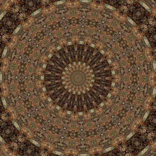 Crotons Kaleidoscope