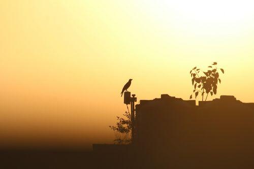 crow sunset sunrays