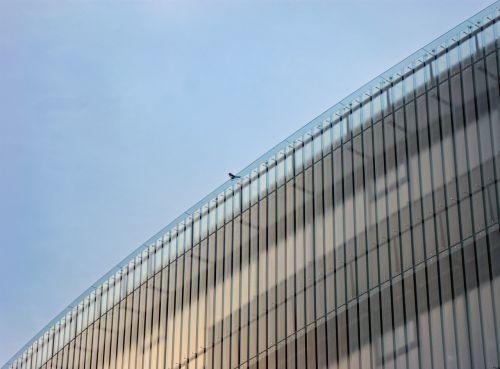 crow birds prague