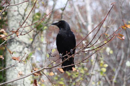 crow pose profile
