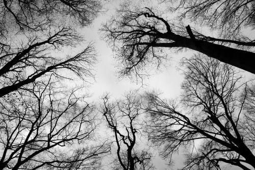crown bald branch sky