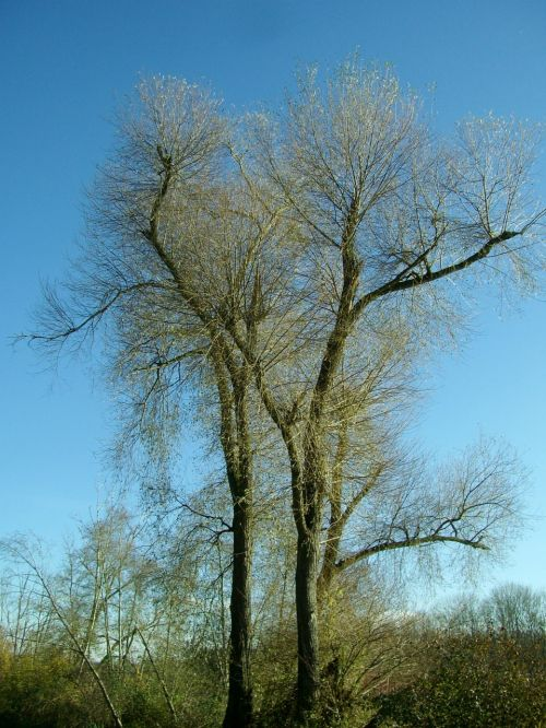 crown forest tree