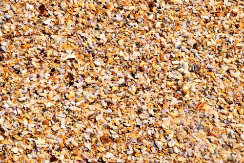 Crushed Seashells