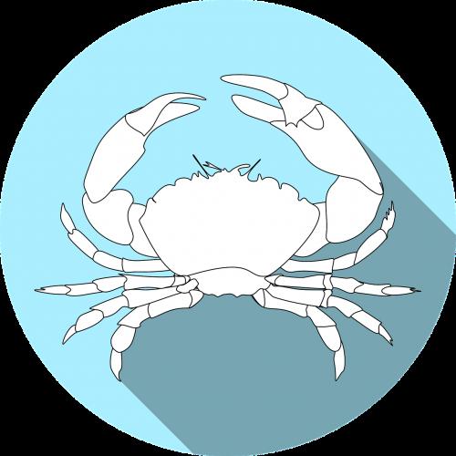 crustacean allergy crab