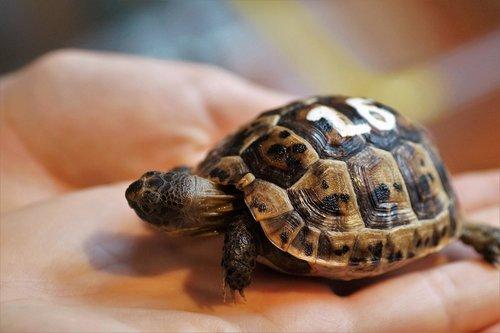 cub  turtle  little turtle