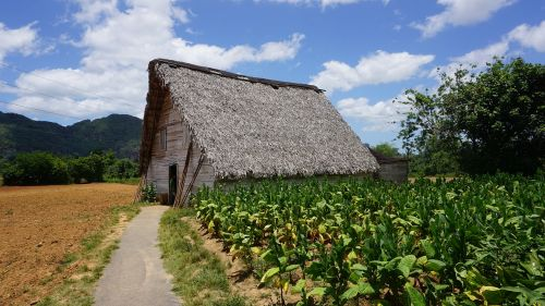 cuba vinales plantation