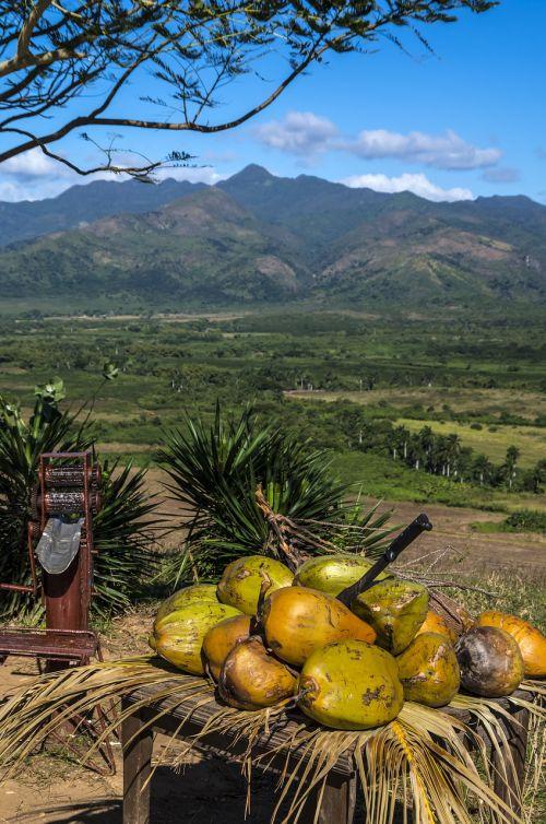 cuba trinidad coconut