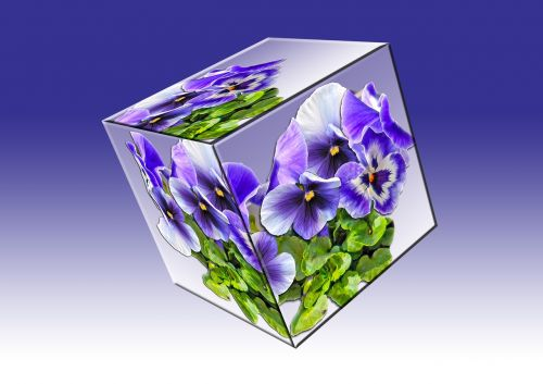 cube floral cube pansy
