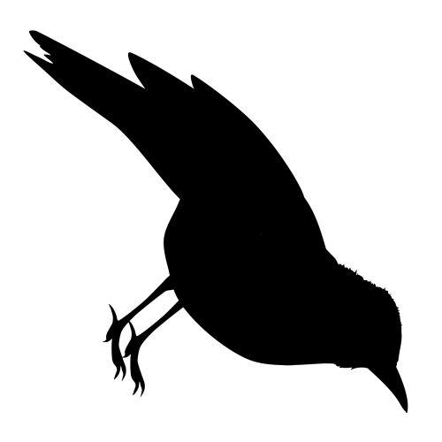 Cuckoo Silhouette