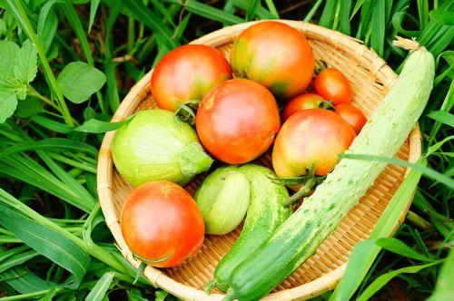 cucumber tomato zucchini