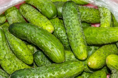 cucumbers food healthy