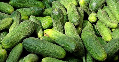 cucumbers farmers local market vegetable market