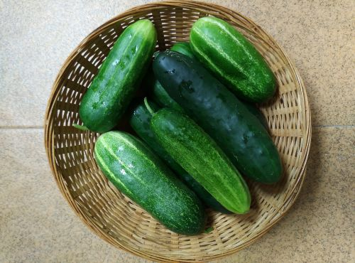 cucumbers orchard vegetables