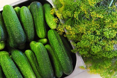 cucumbers  vegetables  healthy