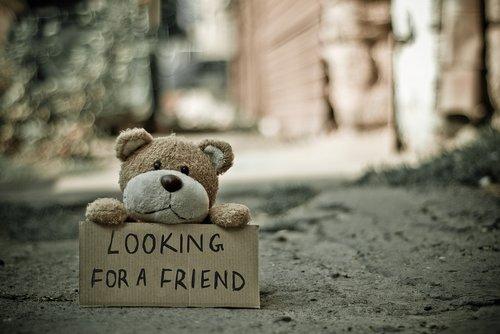 cuddly toy  plush toy  teddy bear