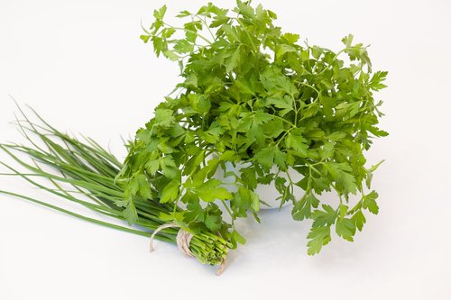 culinary herbs  chives  parsley
