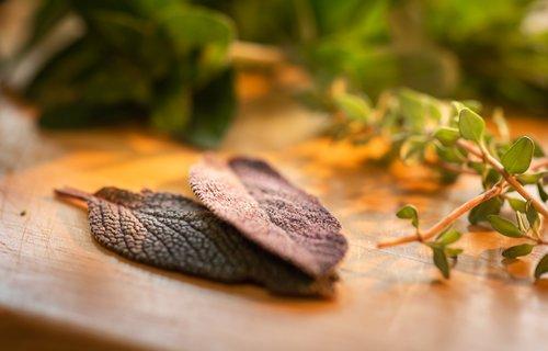culinary herbs  sage  close-up
