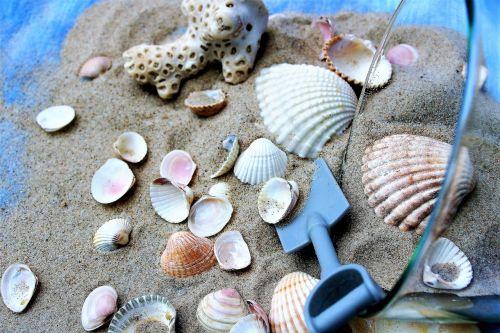 cup seashell sand