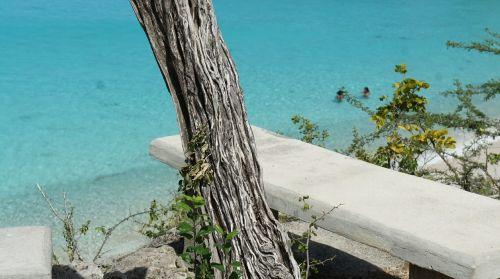 curacao stone bench tree