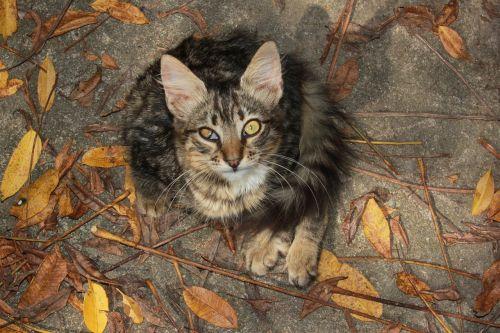 curious looks cat