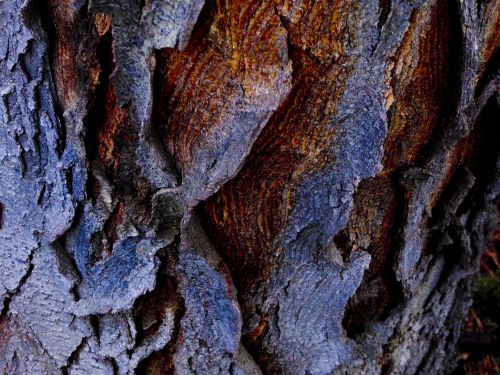 Curled Bark Background