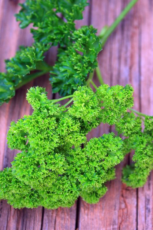 Curled Green Parsley