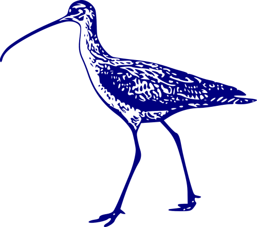 curlew bird animal