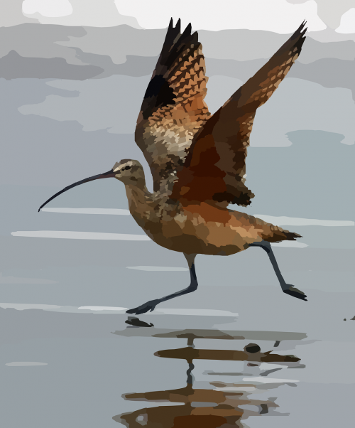 curlew bird water