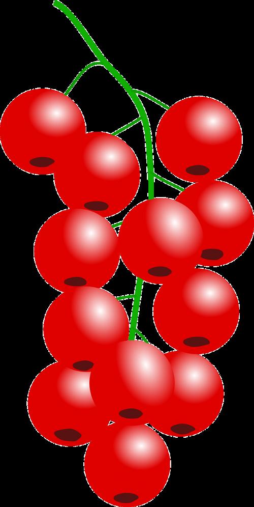 currant cranberries red currant