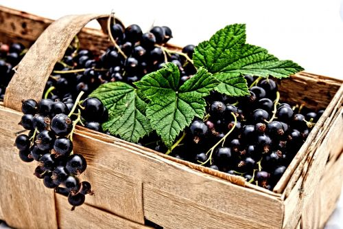 currant black berries