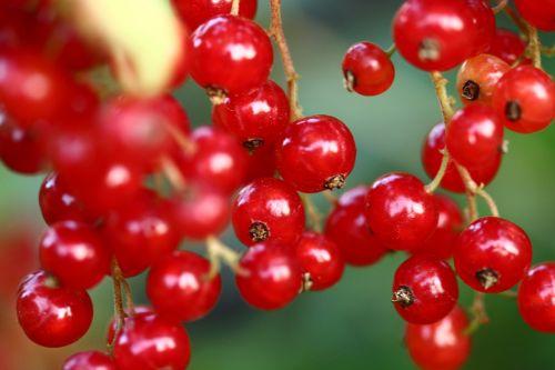 currant currants berries
