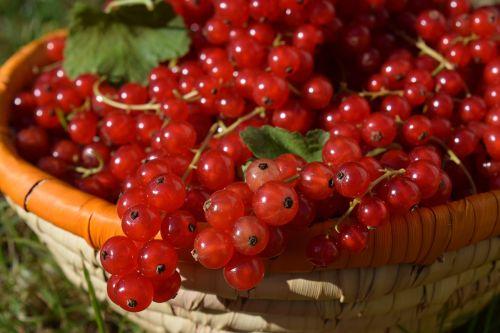 currants basket fruits