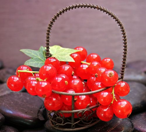 currants fruit red currant