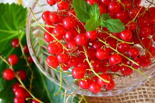 currants red red currant