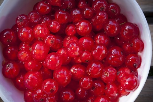 currants  fruits  red