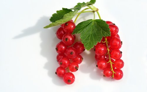 currants  red  fruit
