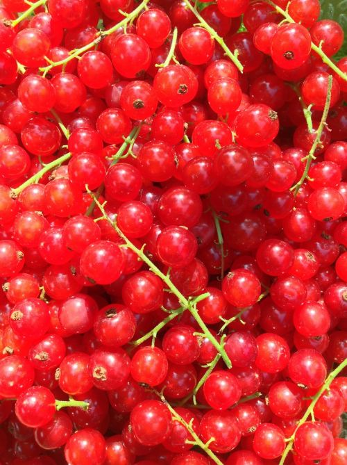 currants red green