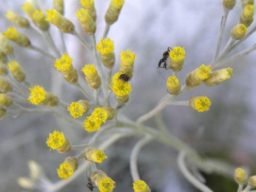 curry brush flowers yellow