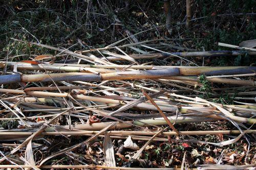 Cut Dried Reeds